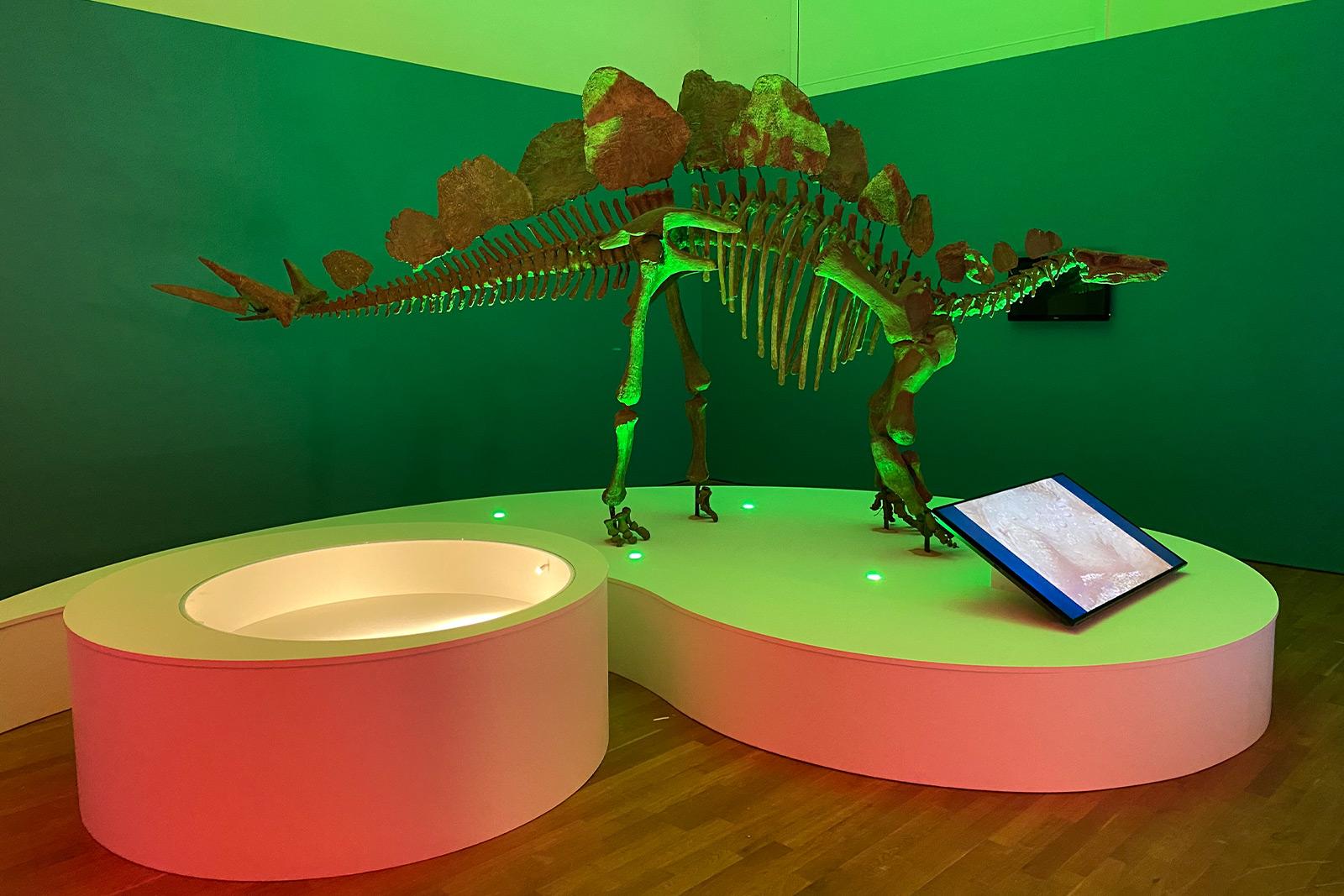 Museums- und Ausstellungsbau